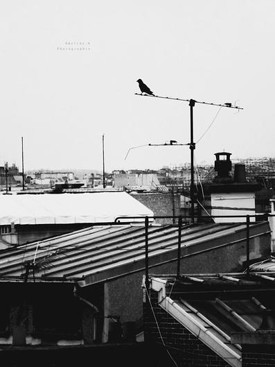 Sur les toits de Paname ...
