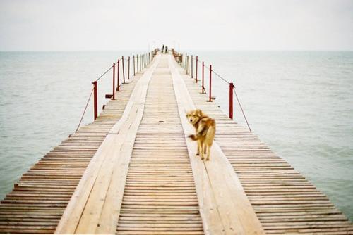 La vie a beaucoup plus d'imagination que nous. François Truffaut