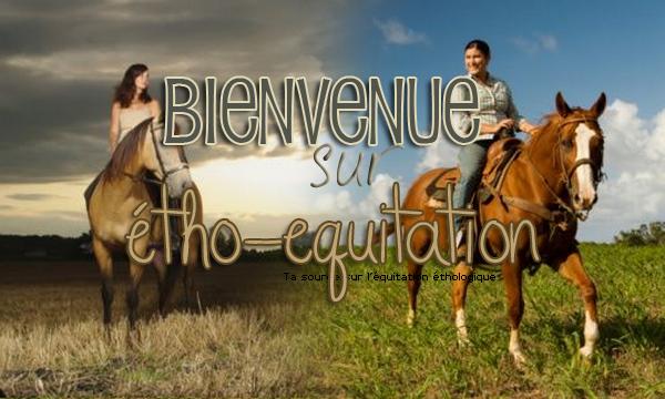 Forum / Annonce / étho-équitation