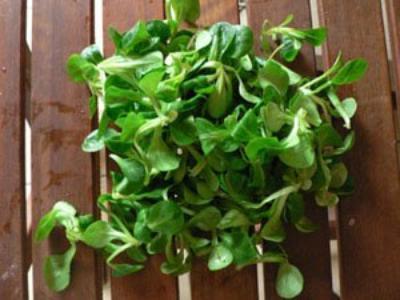 Mâche-salade de blé
