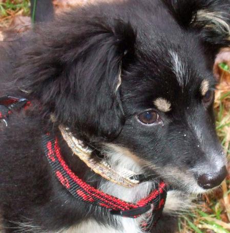 Liste des photos de mon chien Djazzy <3<3<3<3 et de Dorie mon chat