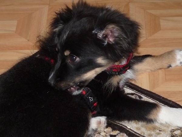 Mon Djazzy en 2009