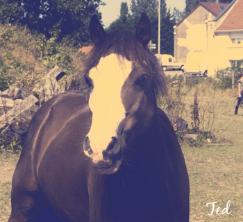 Deux poneys ...  ♥