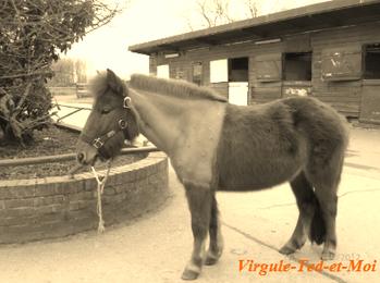 Ted et Virgule .  ♥