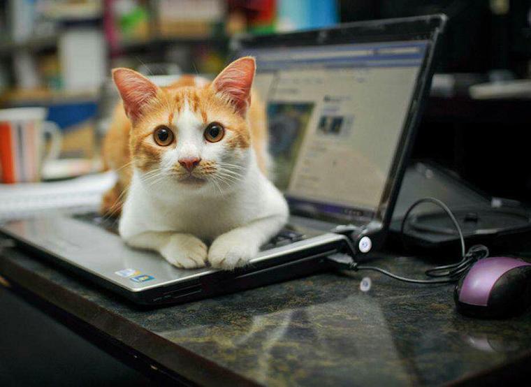 Le mien aussi s installe sur le clavier de mon ordi