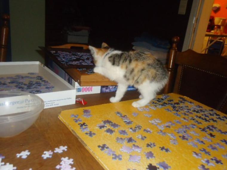 Miss Puzzle ...