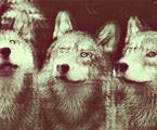 «Tous les êtres ont une fatalité au bonheur» Arthur Rimbaud