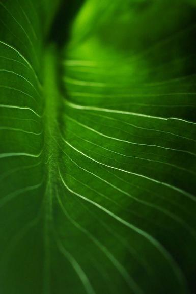 Une feuille qui s'envole dans un tourbillon de feuilles ...
