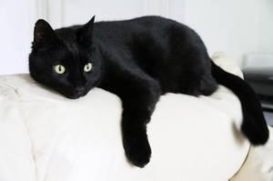 Les chats noir ! trop beau !