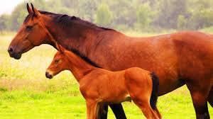 Les chevaux sublime !