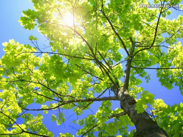 L'arbre du culte sincère