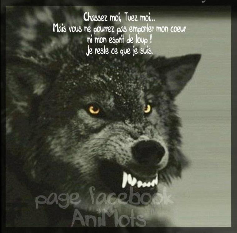 OUI  J'ai les  crocs  faut pas  toucher au loup !!!!!!!!!  trop facile  d'accuser !!!!!!!!!!!!!