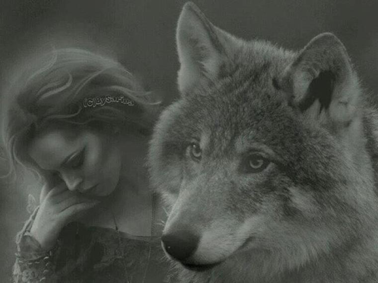 COYOTE  beaucoup le confondent avec le loup  même voir défois avec le renard alors  quelques explications sur le lien possible entre les deux espèces