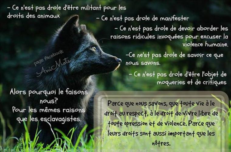 La condition animale... « Les animaux ne demandent pas qu'on les aime, ils exigent qu'on leur foute la paix »