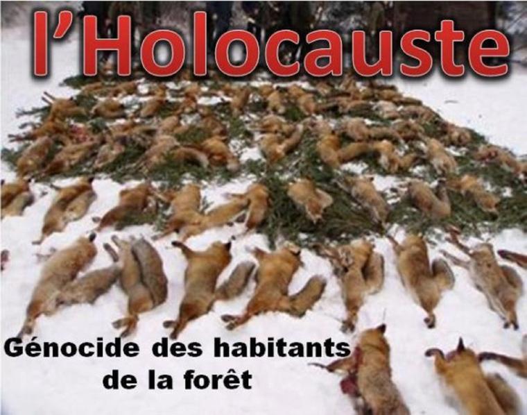 LA DESTRUCTION DU LOUP EST ENCORE AU PROGRAMME !  LE GOUVERNEMENT DEMANDE NOTRE AVIS !!!