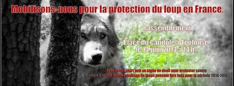 FRANCE, TES LOUPS ONT BESOIN DE TOI !!!!!!!!!!!!!!!!!!!!!!!!!!!