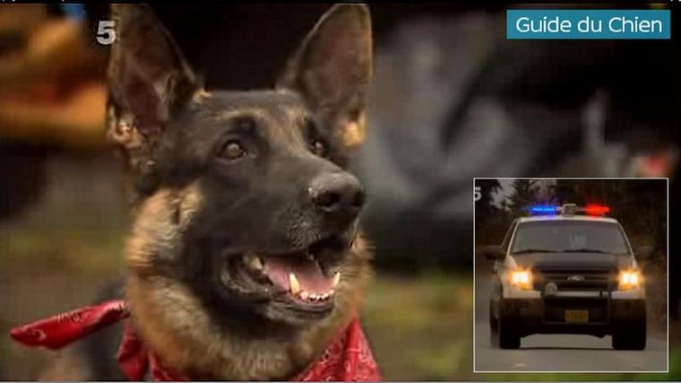 Héroïque : un Berger Allemand guide la police jusqu'à la maison en feu de sa famille..............