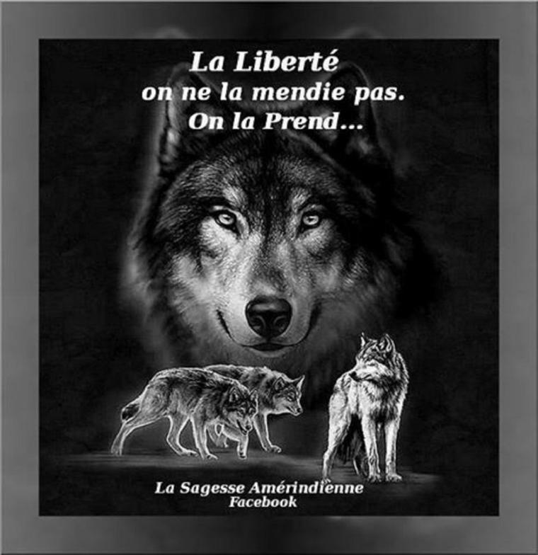 bien oui  mon cerveau est réveillé  là  :D   tant pis pour vous   LE GOTHYQUE :    Trop souvent  ils utilisent le loup  dans leur idéologie  ce que  je n'admet pas  un loup n'est pas un animal imaginaire ni cruel  ni autre  alors  je vais  vous donner un appercu du gothyque on ne se sert pas d'un animal pour en faire une idéologie   aprés à vous de voir si le loup a  sa place là