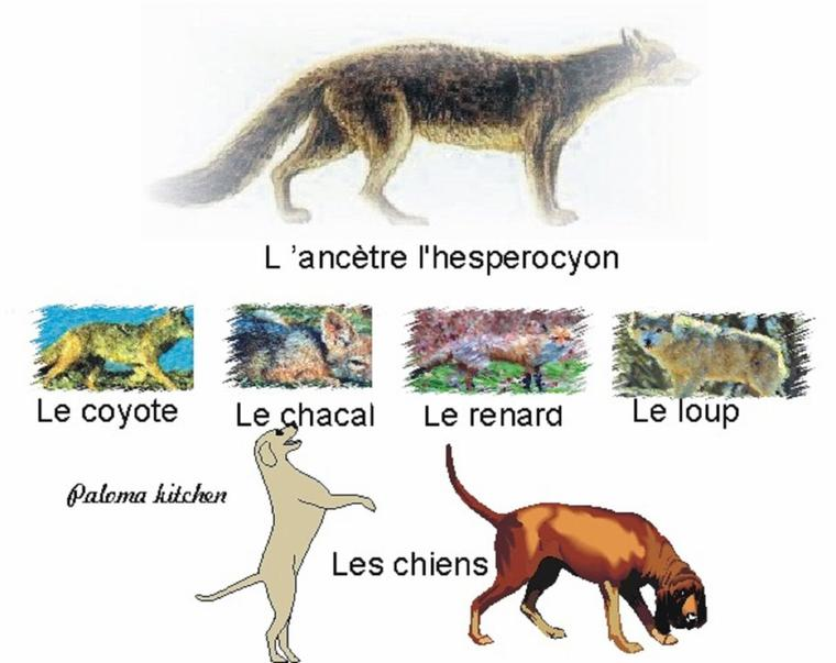 ce  soir  un article  très  interressant  NE PAS LOUPER  A LIRE !!!!  Entre chien et loup : histoire du chien