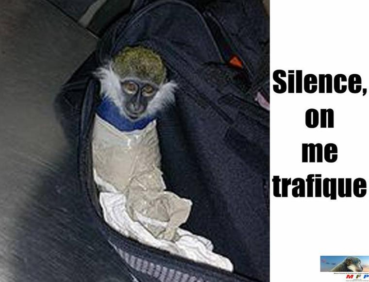 Silence, je respecte toute vie  oui mais  faut  pas fermer les yeux pour  respecter  toutes vies  ne  l'oubiez pas !!!! vous pouvez  en sauver beaucoup !!!!