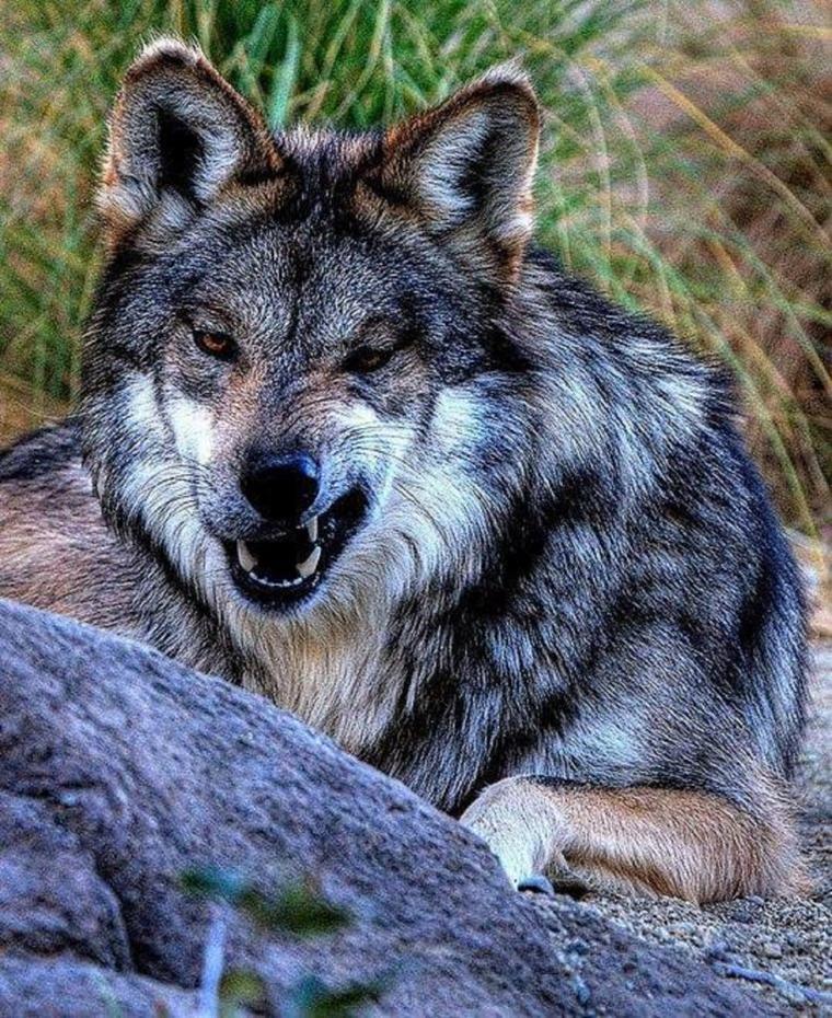 Les animaux sont intelligents, doués d'émotions et sensibles.