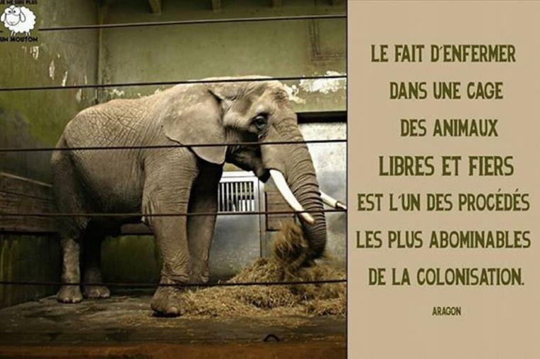 C'est pas leurs places pour ces animaux sauvages. :(