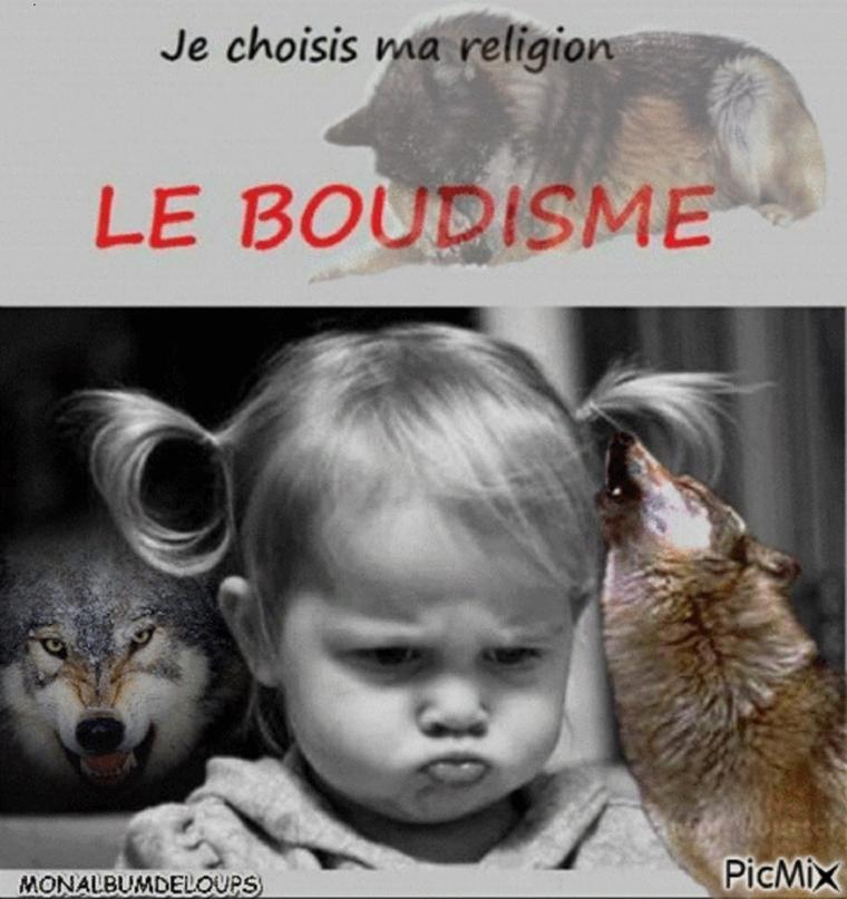 INFO :   BRAVO A LA BELGIQUE  !!!