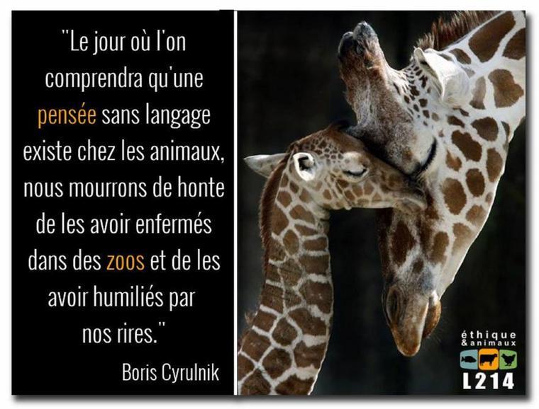 «Les animaux sont principalement et essentiellement la même chose que nous.» «Puissent tous les êtres vivants rester exempts de douleurs !»  « Une compassion sans bornes qui nous unit avec tous les êtres vivants, voilà le plus solide, le plus sûr garant de la moralité. »