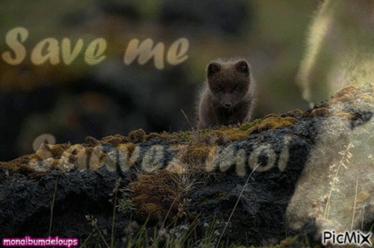 FREEDOM !!!!  liberté et respect pour les animaux sauvages !!!!!!