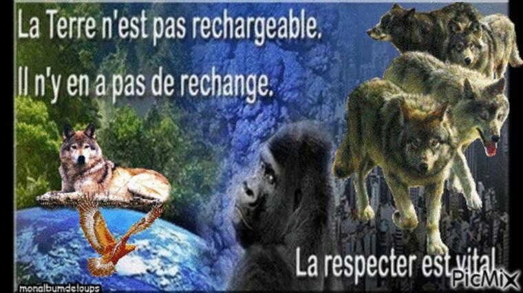 bon week end  hommage au loup !!!!!!!!!!!!  avec la voix  de patti smith sublimeeeeeeeeeee par amour des loups