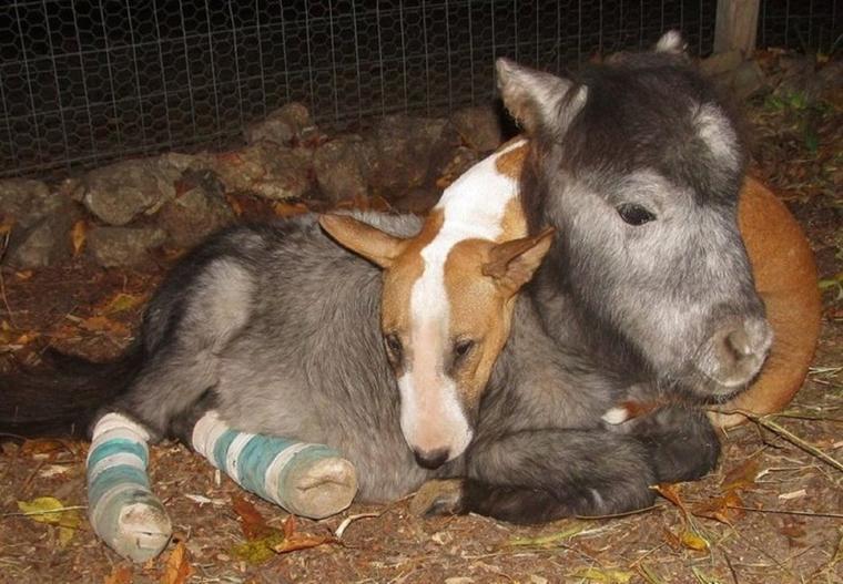 l'empathie des animaux est toujours  magnifique !!!