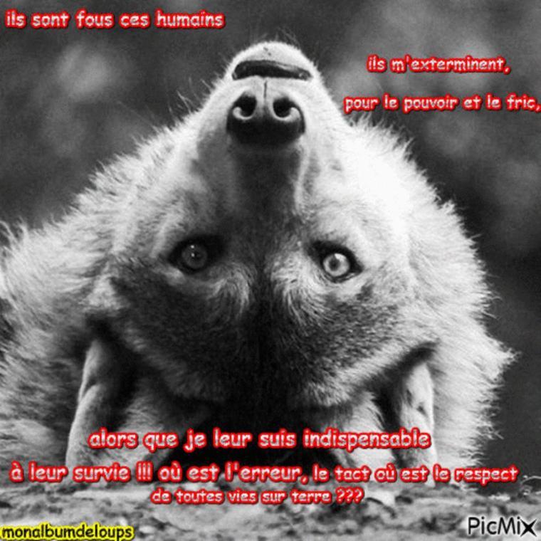 STOP AUX PARCS ANIMALIERS OU ZOO  un animal sauvage n'y pas pas sa place !!!  et  si  je vous  humains je vous mettais dans un parc cloturé ou un zoo ??? vous en penserez quoi de moi ???  A LIRE   MERCI  DE  LE  FAIRE  POUR EUX  !!!!!!!!!!!!!!! Ma lutte ne cessera jamais tant que l'humain n'aura pas laissez le loup en paix !!!!!!!!!!!!!!!!!!!!!!!!!!
