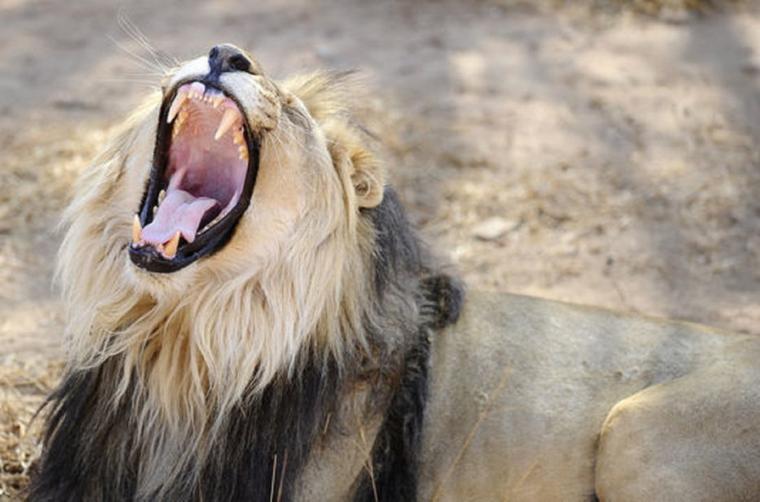 La Terre a perdu la moitié de ses populations d'espèces sauvages en 40 ans
