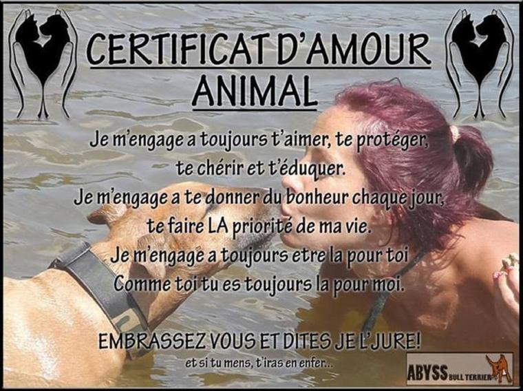 Choisir la compassion pour le Peuple Animal...