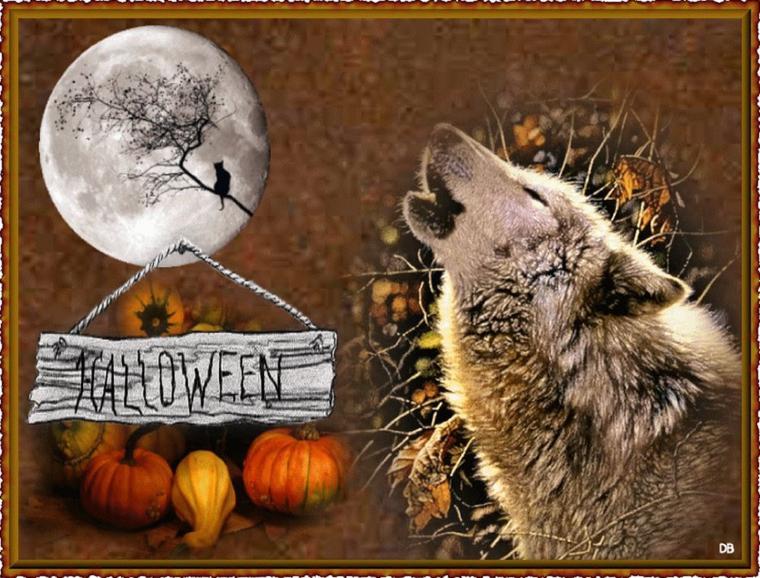 joyeux halloween à toutes les meutes de loups  avec cette  superbe vidéo