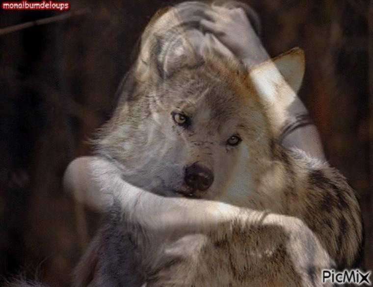 Danse avec les loups dans le Far Ouest chinois du n'importe quoi  oui donner un bout de saucisse à un loup mais  entre  combien de mètres carrés ??? pas concevable  pour moi le  loup doit rester en liberté et j'y tiens la dessus  humains vous me donnez envie de vomir un animal n'est pas un jouetttttttttttttttttt !!!!!!!!!!!!!!!!!! si je vous mettais en cage vous et que je vous tends une saucisse ???  allé  dites moi votre réaction ????