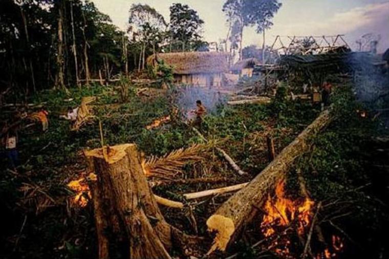 LA DEFORESTATION  les dangers pour toute la planête