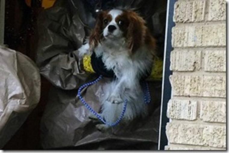ARTICLE IMPORTANT :  La maladie d'Ebola chez le chien  ptite mise au point  !!!