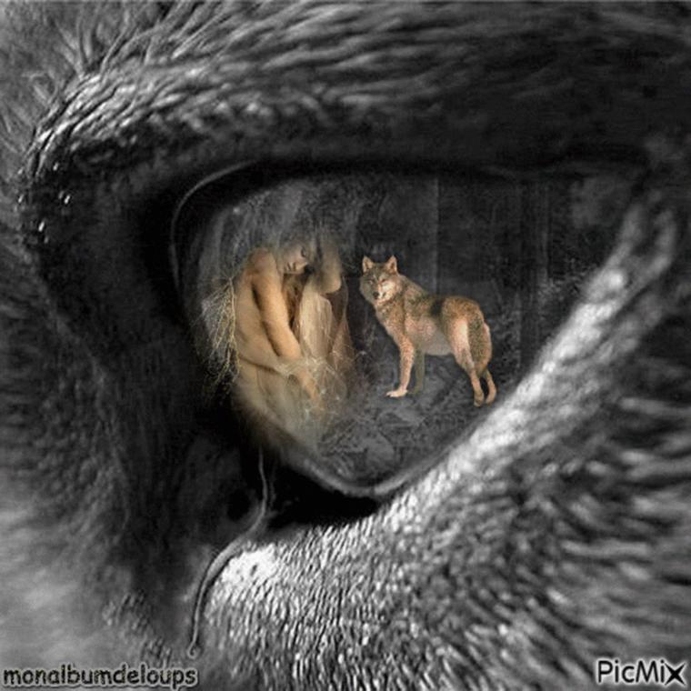 Des loups identifiés de façon infaillible grâce à leur hurlement