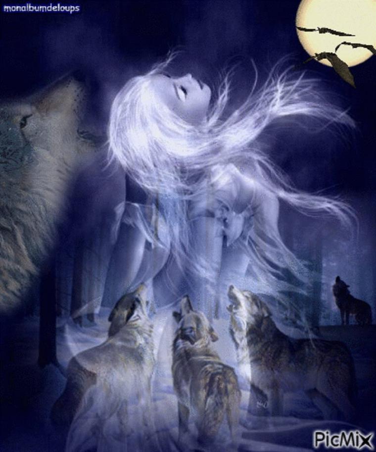 Quelle serait votre réaction si un loup se présentait devant vous ???