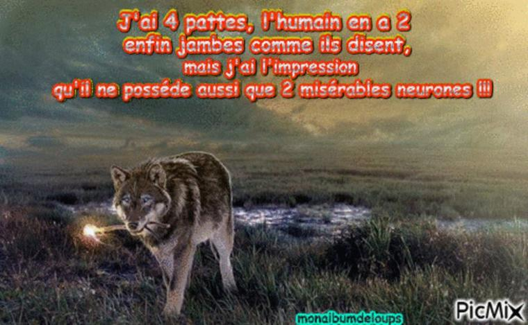 on tue ours, loups, linx... notre écosystème est il en danger ???  oh  que OUI et pas qu'un peu !!!!