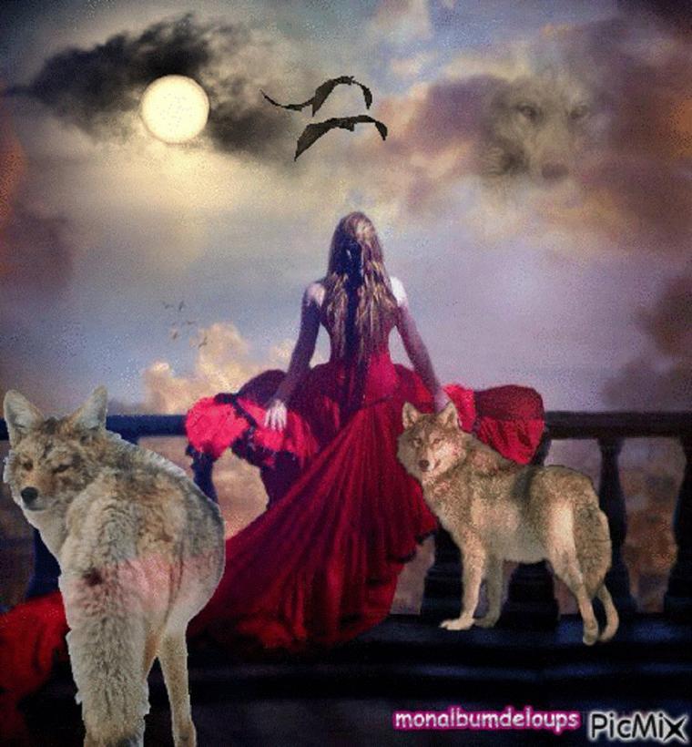 XVIIème siècle en France, on comptait près de 30 000 loups. Mais cet animal a toujours, depuis le Haut Moyen Âge, suscité la peur et le rejet des hommes. Ceci peut s'expliquer en quatre points : – L'influence de l'Église catholique pour laquelle le loup, animal vivant dans l'obscurité et le mystère des forêts, représentait un Mal à éradiquer Point important : il est paradoxal de constater que, si l'on remonte aux origines de la cause, la multiplication des attaques de bétail est due aux activités humaines abusives comme la déforestation et la chasse intensive réduisant le nombre de proies sauvage pour le loups (Le Loup : biologie, m½urs, mythologie, cohabitation, protection…