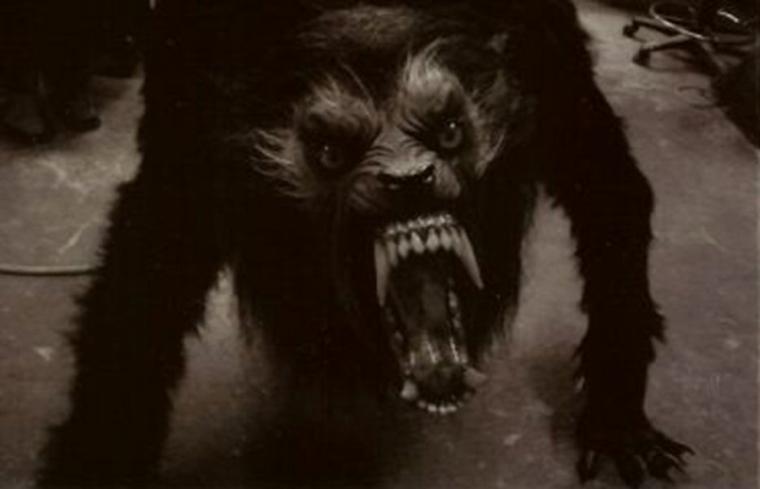 Lycanthrope ou loup garou pour certain ne surtout pas confondre avec le loup  maladie mentale ou autre beaucoup de chercheurs se posent encore la question  mais surtout ne pas associé le loup aux débilités des humains !!!!  sinon y a plus qu'a vous faire interner :D  arrêtez vos conneries qui ne font que nuire à la survie du loup merci pour lui