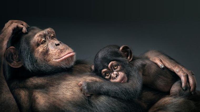Emouvante vidéo de singes retrouvant le soleil après 30 ans en cage