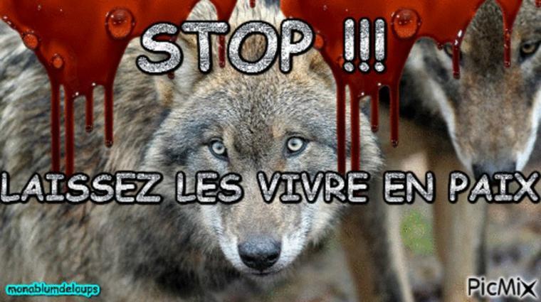 nous n'avons pas de soutient certe loups nous sommes seuls mais on a encore le droit d'ouvrir notre gueule !!!!!! si c'est pas nous qui l'ouvrons faite le pour nous !!! merci !!!