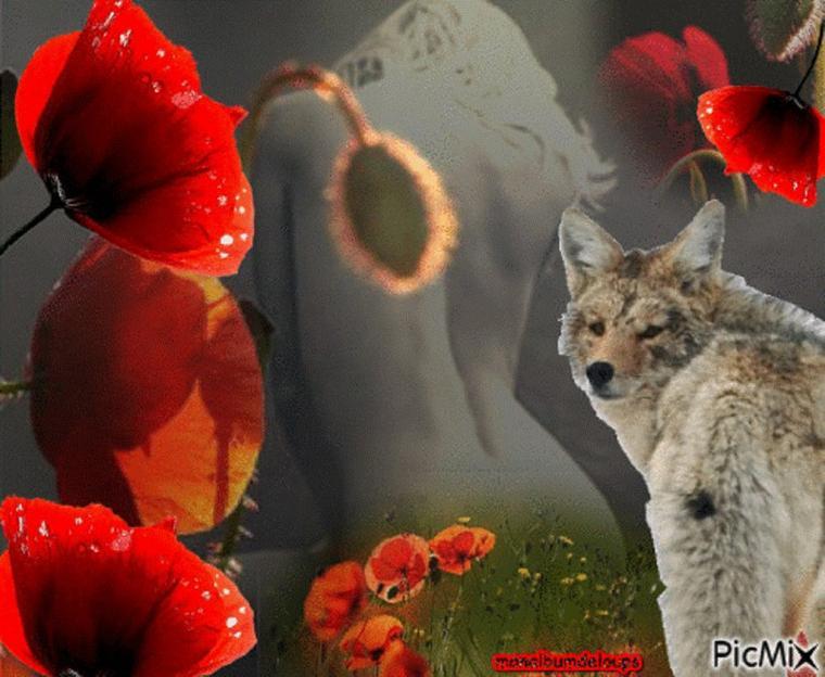 Interwiew de l'éthologue Pierre Jouventin    Vous n'allez plus voir les loups, les chiens et les hommes comme avant