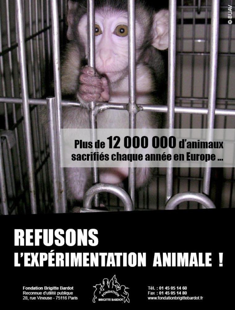 allez voter besoin de vos votes merci pour nos sans voix !!! Faut-il interdire les expérimentations sur les animaux?