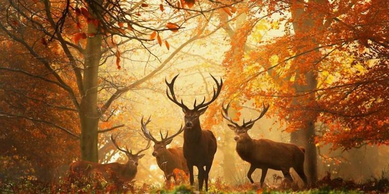 De surprenants habitants peuplent les forêts…Etroit sentier qui s'enfonce dans une sombre forêt à peine éclairée par un rayon de lune, silhouette tortueuse d'un arbre mort, bruissement des feuilles, craquement d'une branche, sensation d'une vie foisonnante et cachée… L'arbre et la forêt suscitent des émotions fortes. Nos ancêtres ont aimé peupler la forêt de créatures nées de leurs rêves, leurs frayeurs, leurs croyances aussi.