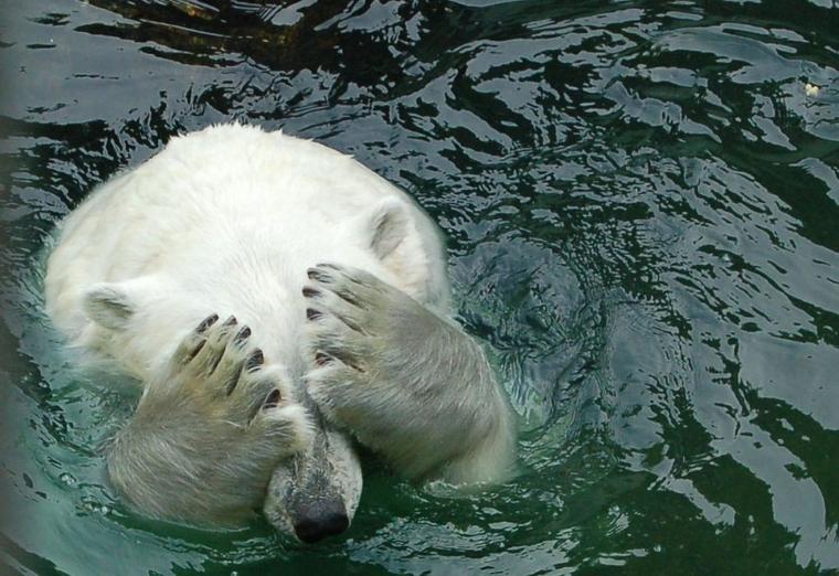 Stress chez les loups, les ours polaires et les chauves-souris ...