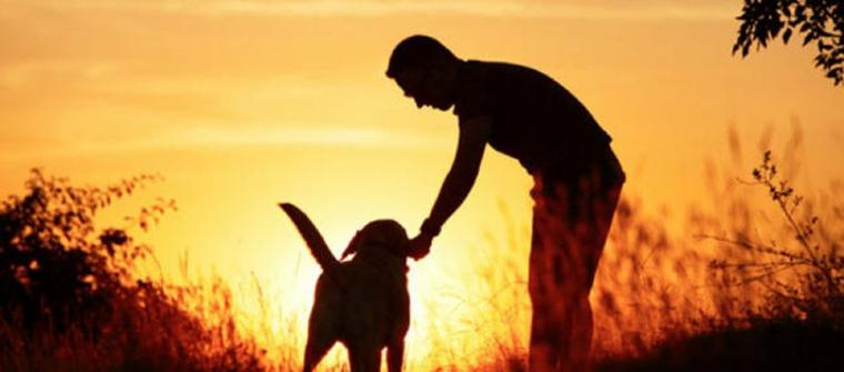 ANIMAUX – Leur mort, les animaux ont aussi une âme